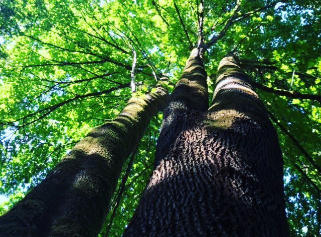 Forestry Photo By Gundula Hirn